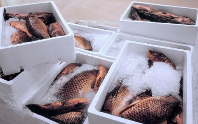 Shipping Seafood